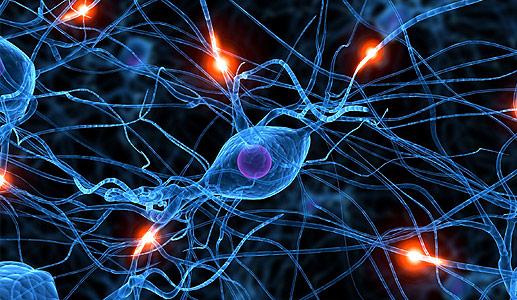 El sexo produce neuronas